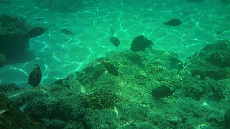 Similan Island 12